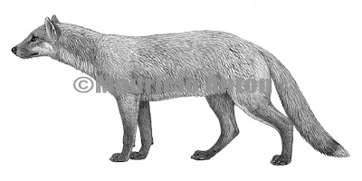 Leptocyon extinct canidae
