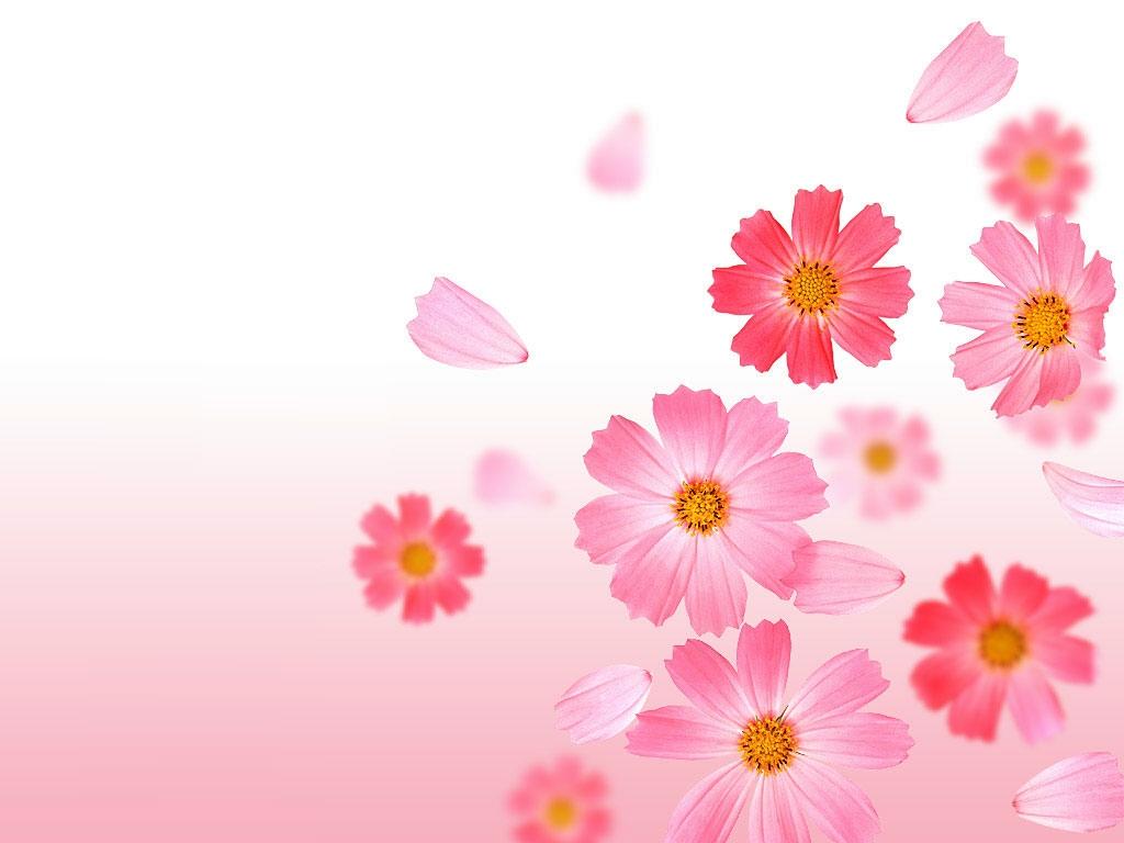 http://4.bp.blogspot.com/-TwrGRcKzmO0/T8zFIxYwtDI/AAAAAAAAEg0/kNO0Gs6MKlE/s1600/Flower-wallpaper-28.JPG
