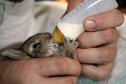 Nos petits freres les animaux c 39 est l 39 heure du biberon - Comment se debarrasser des lapins sauvages ...