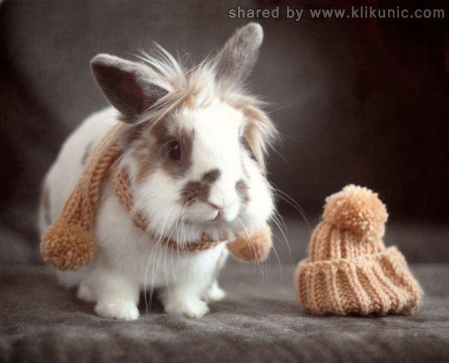 http://4.bp.blogspot.com/-TxagUymIkjc/TXXbpKmIw4I/AAAAAAAAQa4/_lPfuwPD-HY/s1600/these_funny_animals_632_640_25.jpg