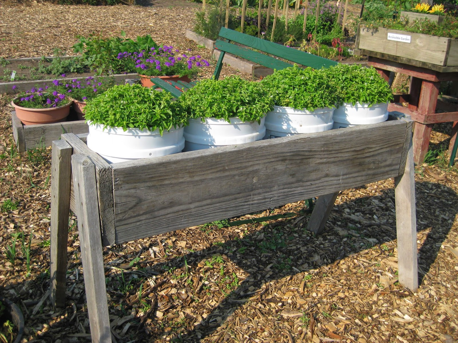 Rotary botanical gardens hort blog no stoop gardening for Gardening 5 gallon bucket