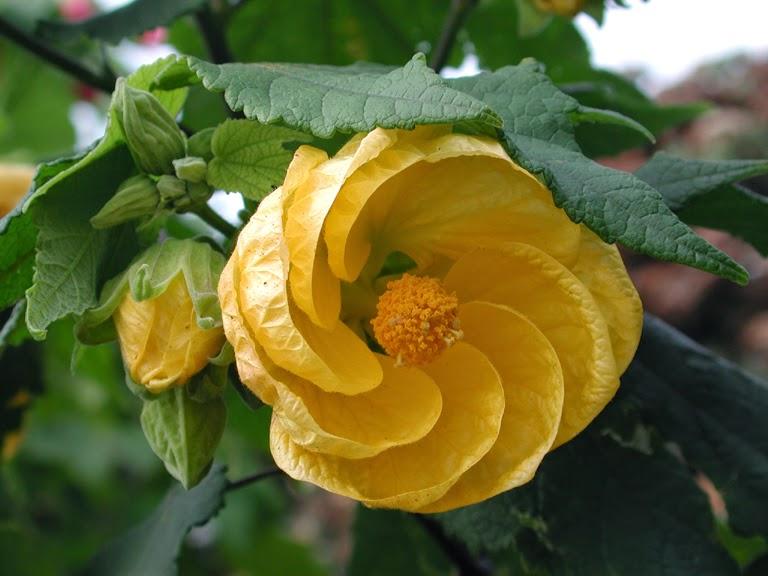 flores exoticas imagen