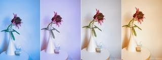 5 نصائح لإلتقاط الصورة بطريقة إحترافية بكاميرا هاتفك المحمول
