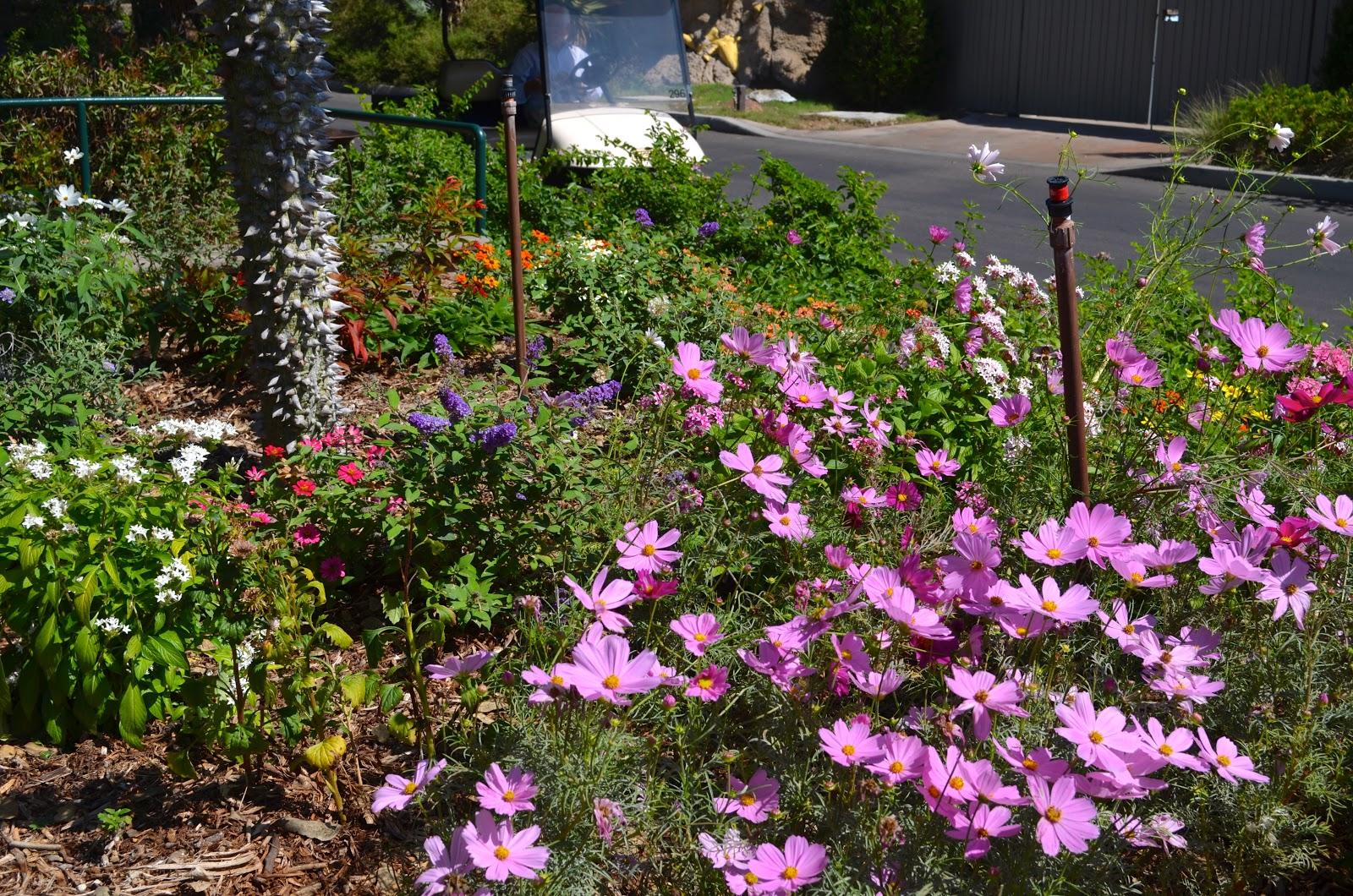 Milkweed Gardens Places Pollinator Garden San Diego Zoo