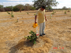 Uso da garrafa PET na irrigação de fruteiras