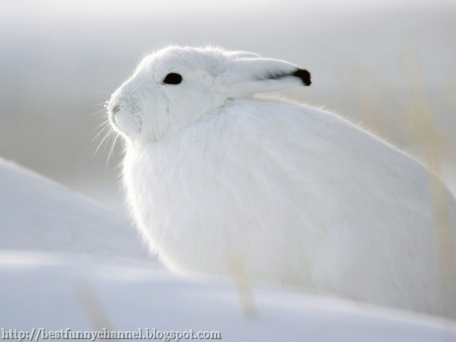 Beautiful white rabbit.