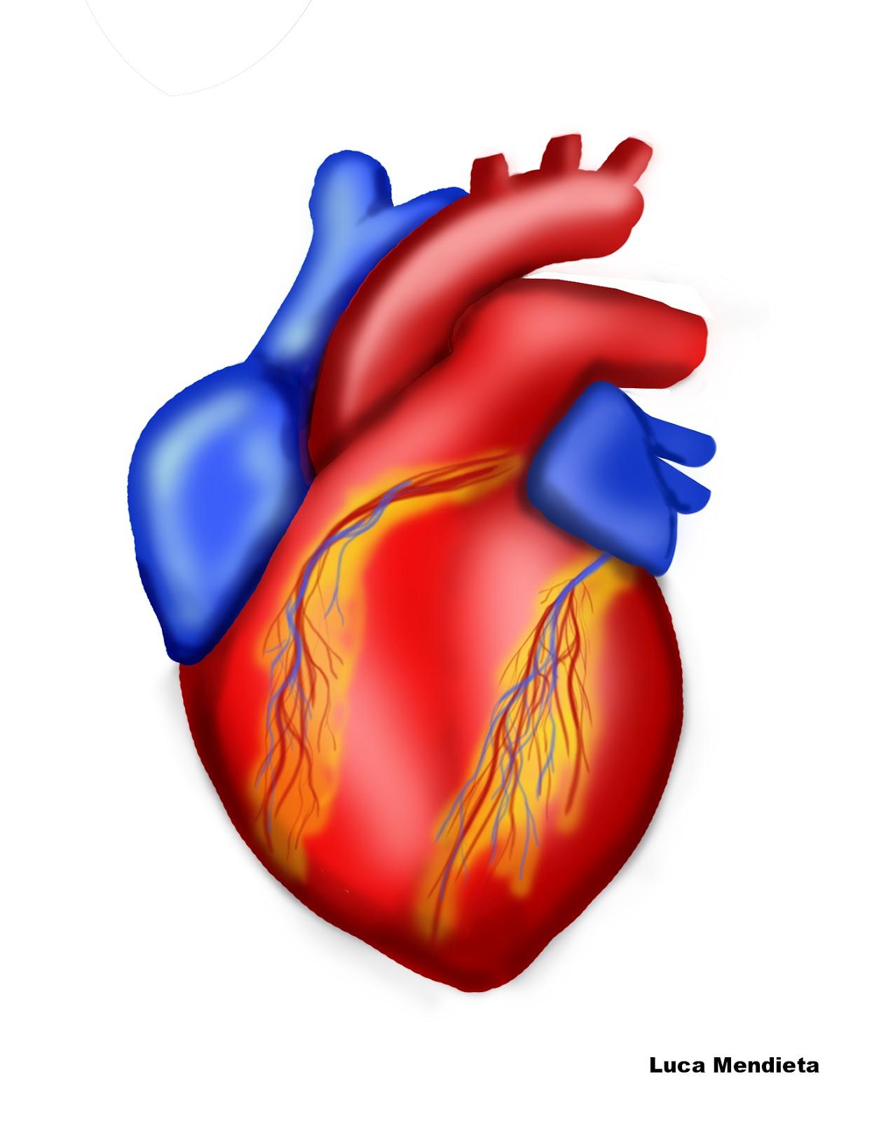 El sistema Circulatorio 5to \