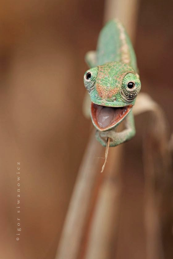 Reptiles can be cute too :)