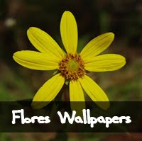 flores wallpapers