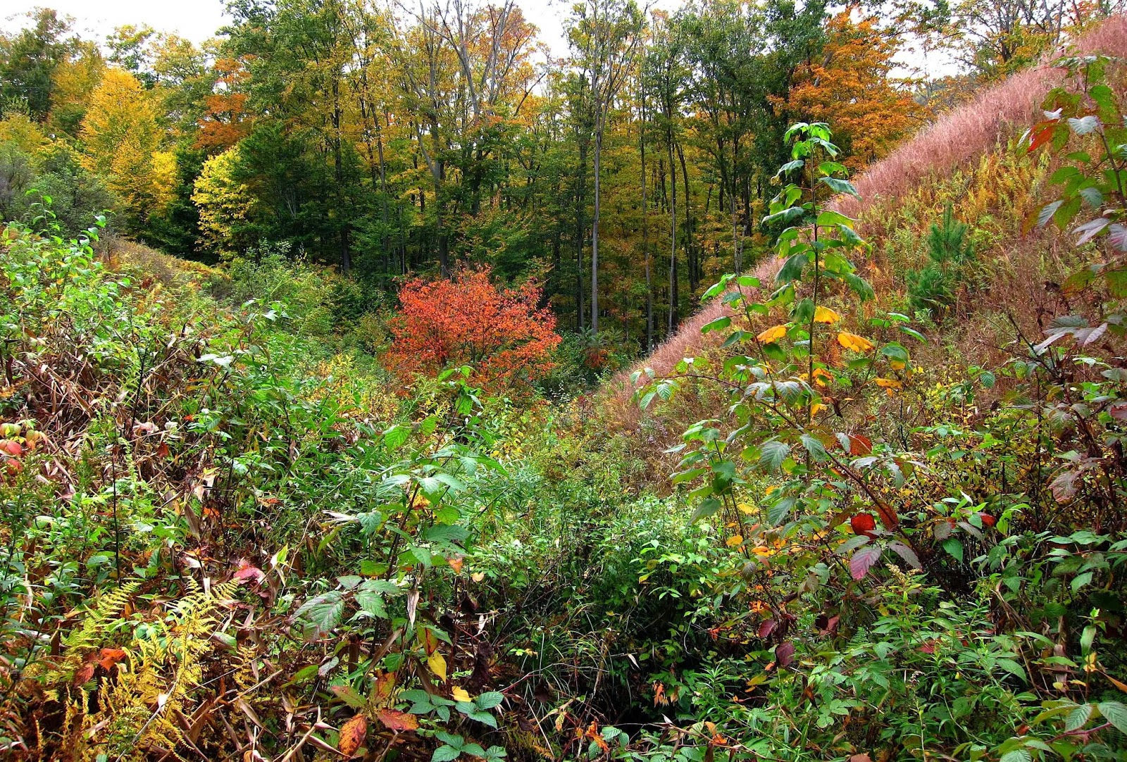Saratoga woods and waterways: A Kaleidoscope of Autumn Color