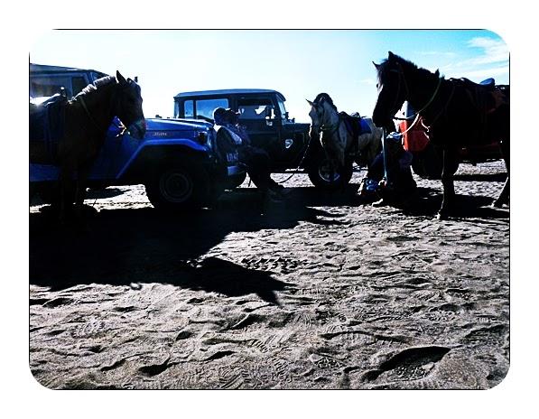 Paket Wisata Bromo 3 - Suasana parkiran hardtop dan kuda