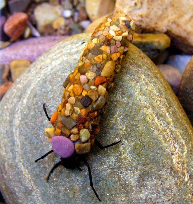 When it comes time to create a caddis pupa, it literally clings to everything. Sand, shells, pebbles and stones, mixed with his silk transformed into a safe cocoon.