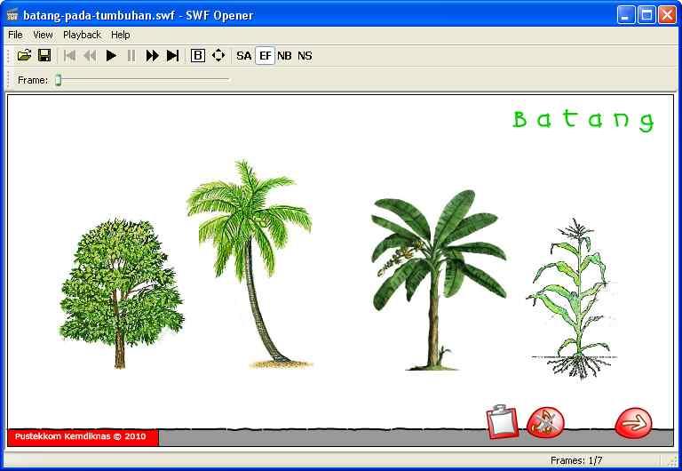 Media Pembelajaran Animasi Batang Tumbuhan Pusat Makalah