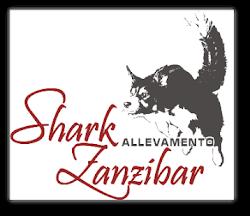 Shark Zanzibar