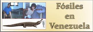 Fósiles de Urumaco, estado Falcón.