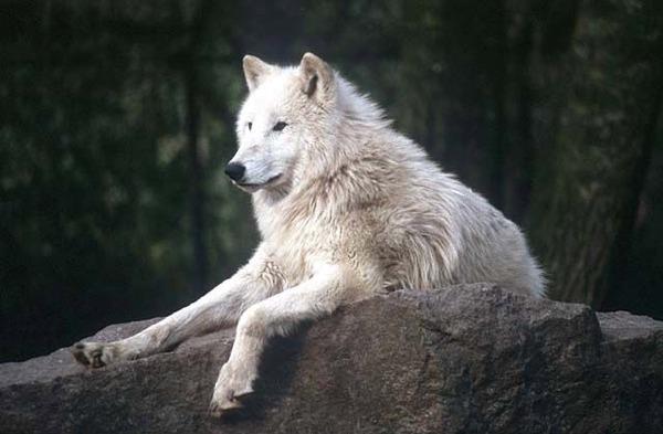 самые красивые животные мира фото