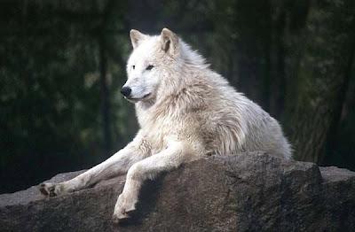 1001 ru — самые красивые животные мира