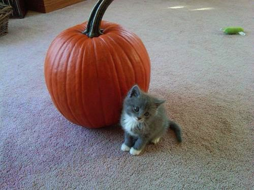 Funny halloween animals2-12