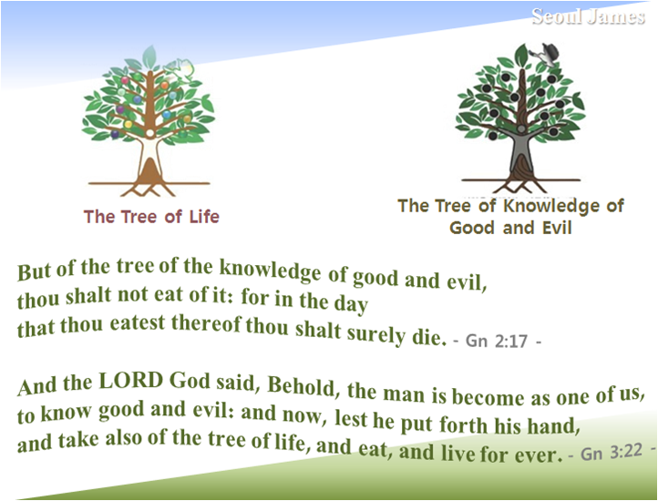 Shincheonji good seed shincheonji testify the tree of What is the meaning of tree