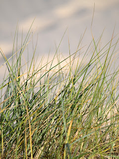 morning - beach grass