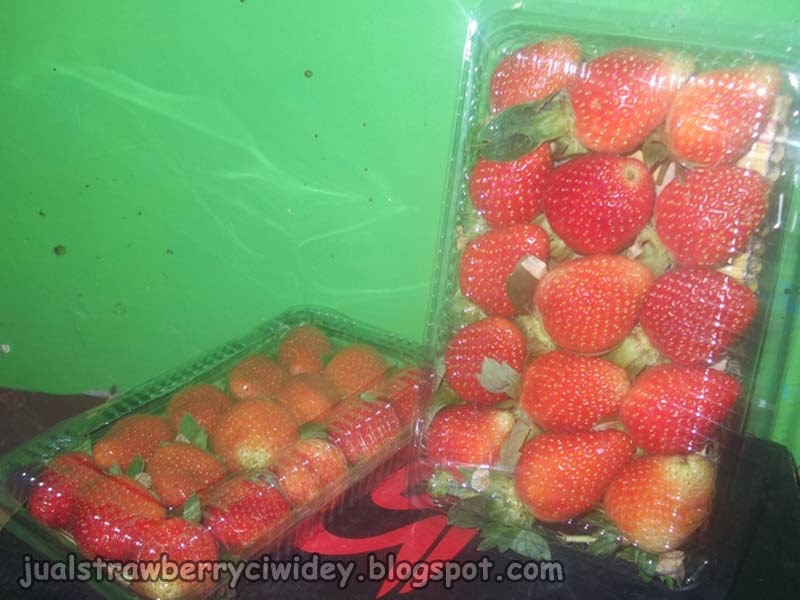 jual strawberry grade a