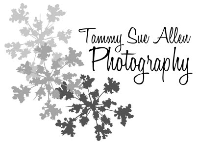 Tammy Sue Allen Photography