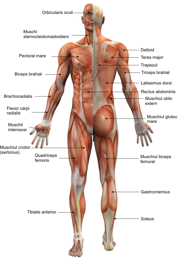 Crampe durere in abdomen ?i spatele inferior