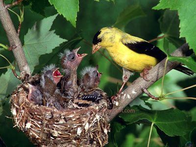 amazing wild birds with baby birds Pc wallpapers