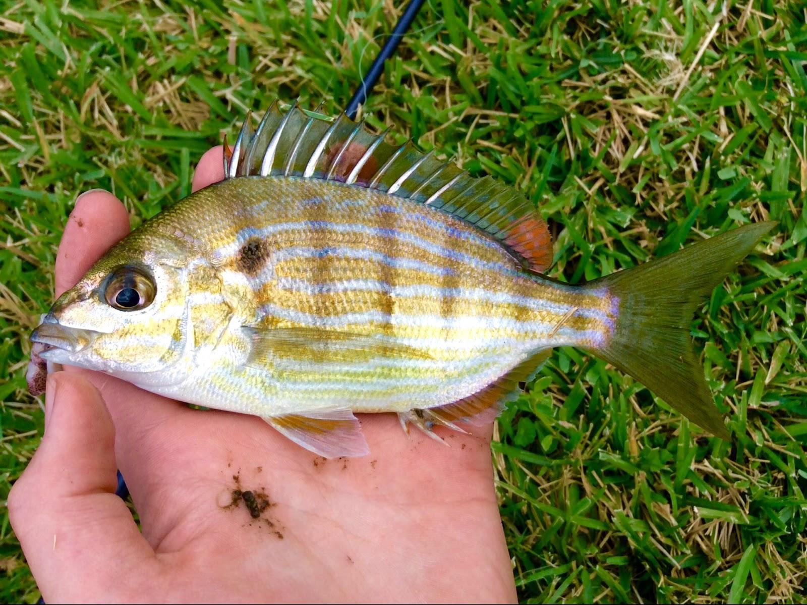 Fishing Where it\'s Warm (Florida)   roughfish.com