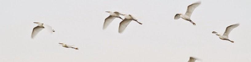 sayap,sayap patah