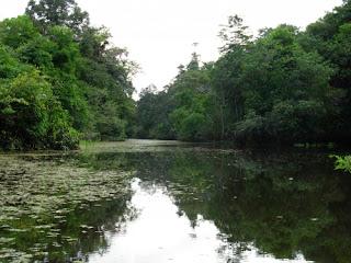 Los monstruos del Amazonas Mini_500_6230_1258585780742197