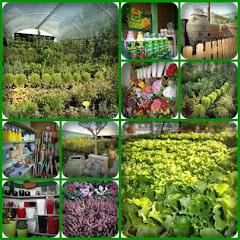 batras garden center