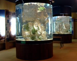 aquAgrom: Les principaux composants d'un aquarium d'eau douce