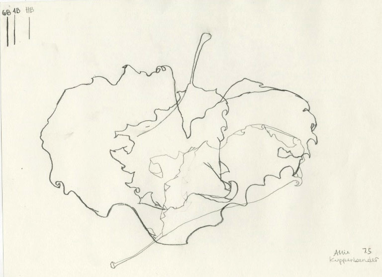 Contour Line Drawing Leaf : Introduction to the studio allie kuppenbender leaf line