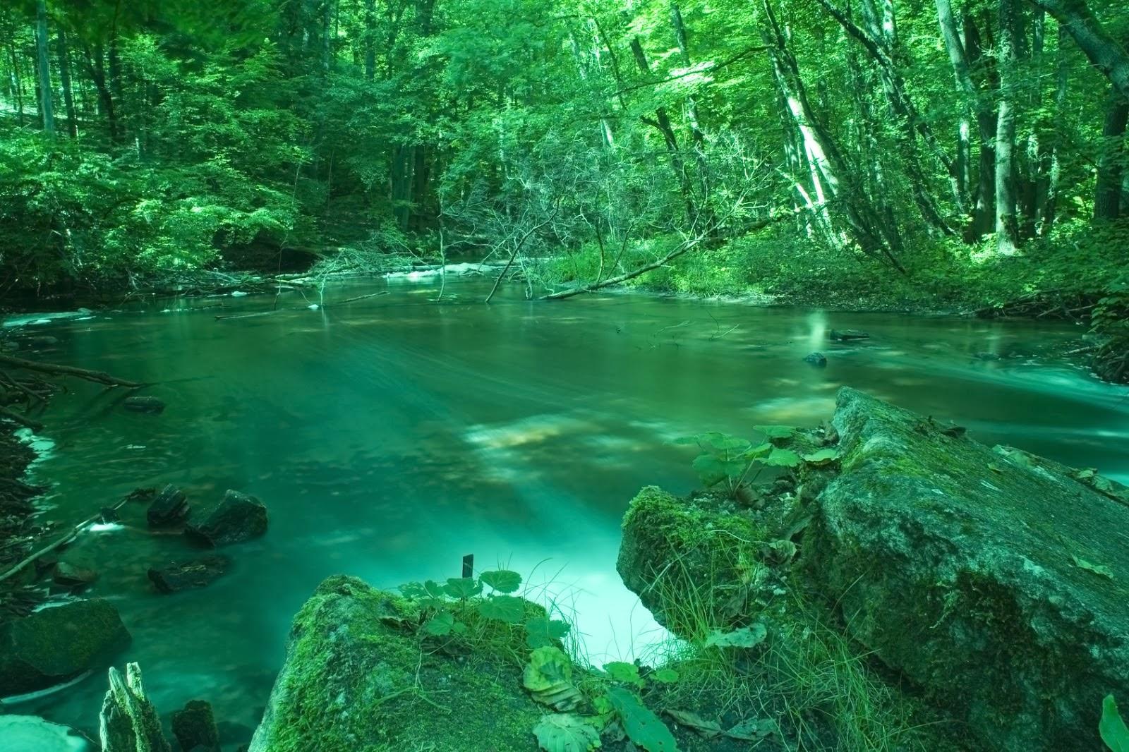 Ecosistemas Y Naturaleza Ecosistemas
