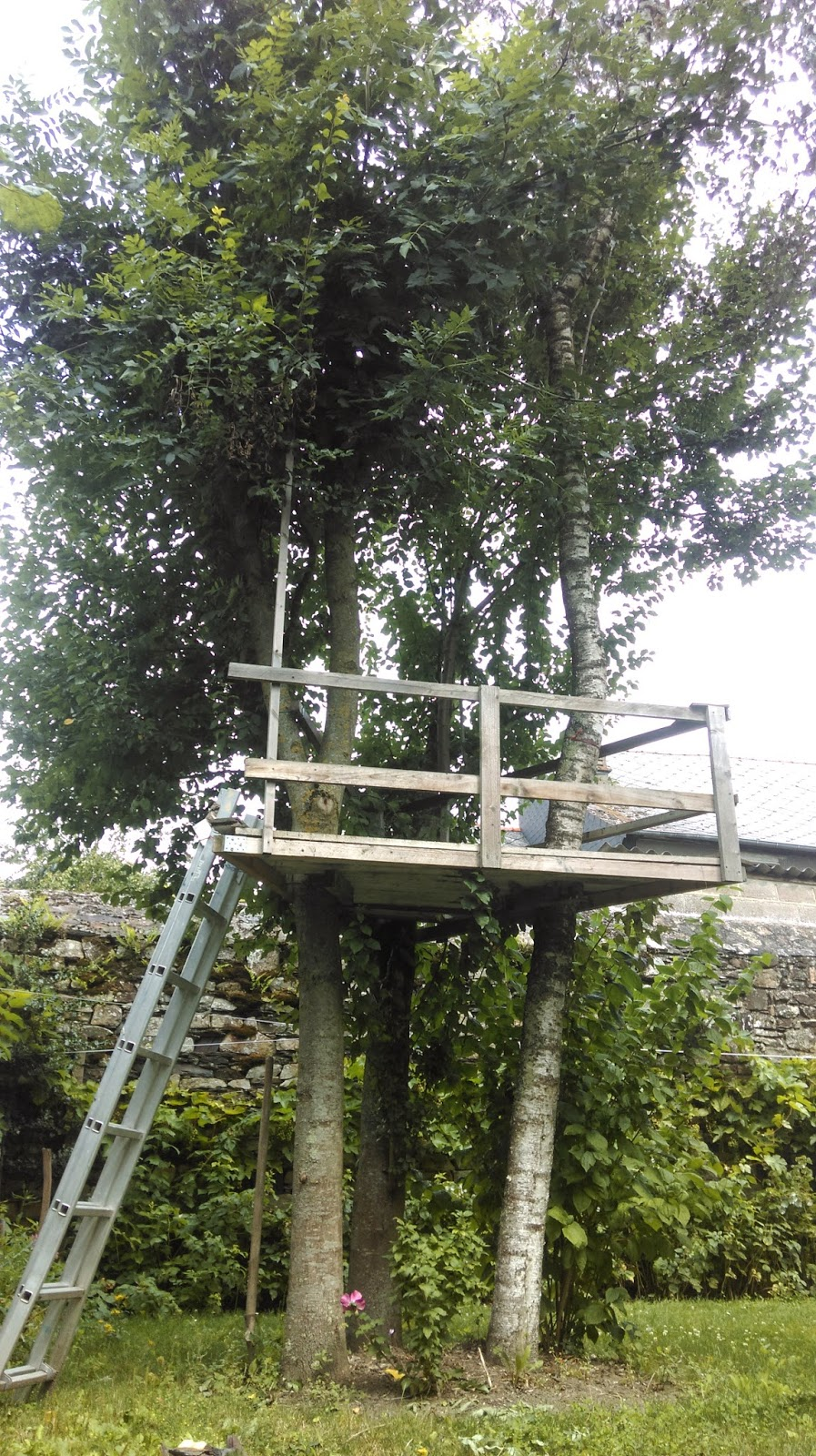 Redirecting - Construire une cabane dans les arbres ...