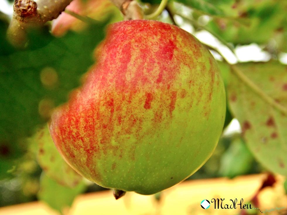 Jabłko bogate w witaminy