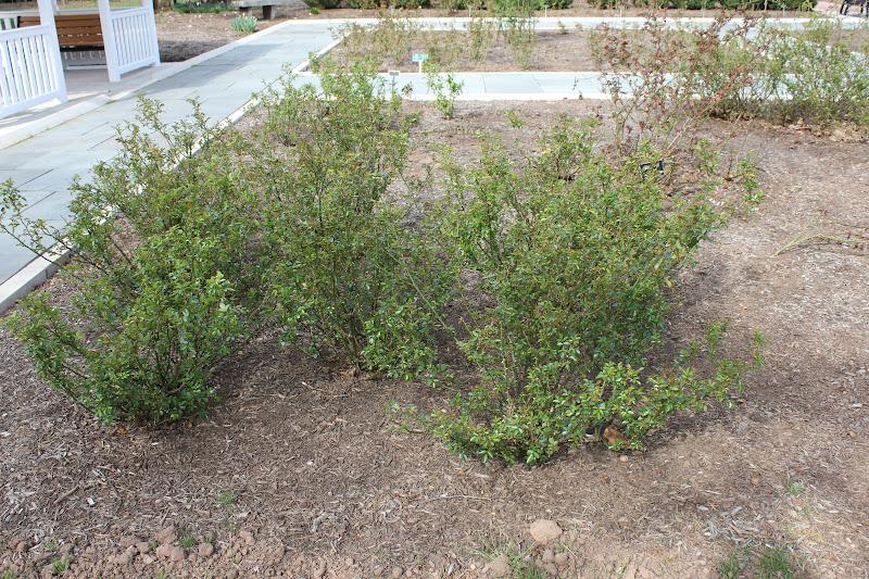 Garden State Roses Sleeping Rose Garden
