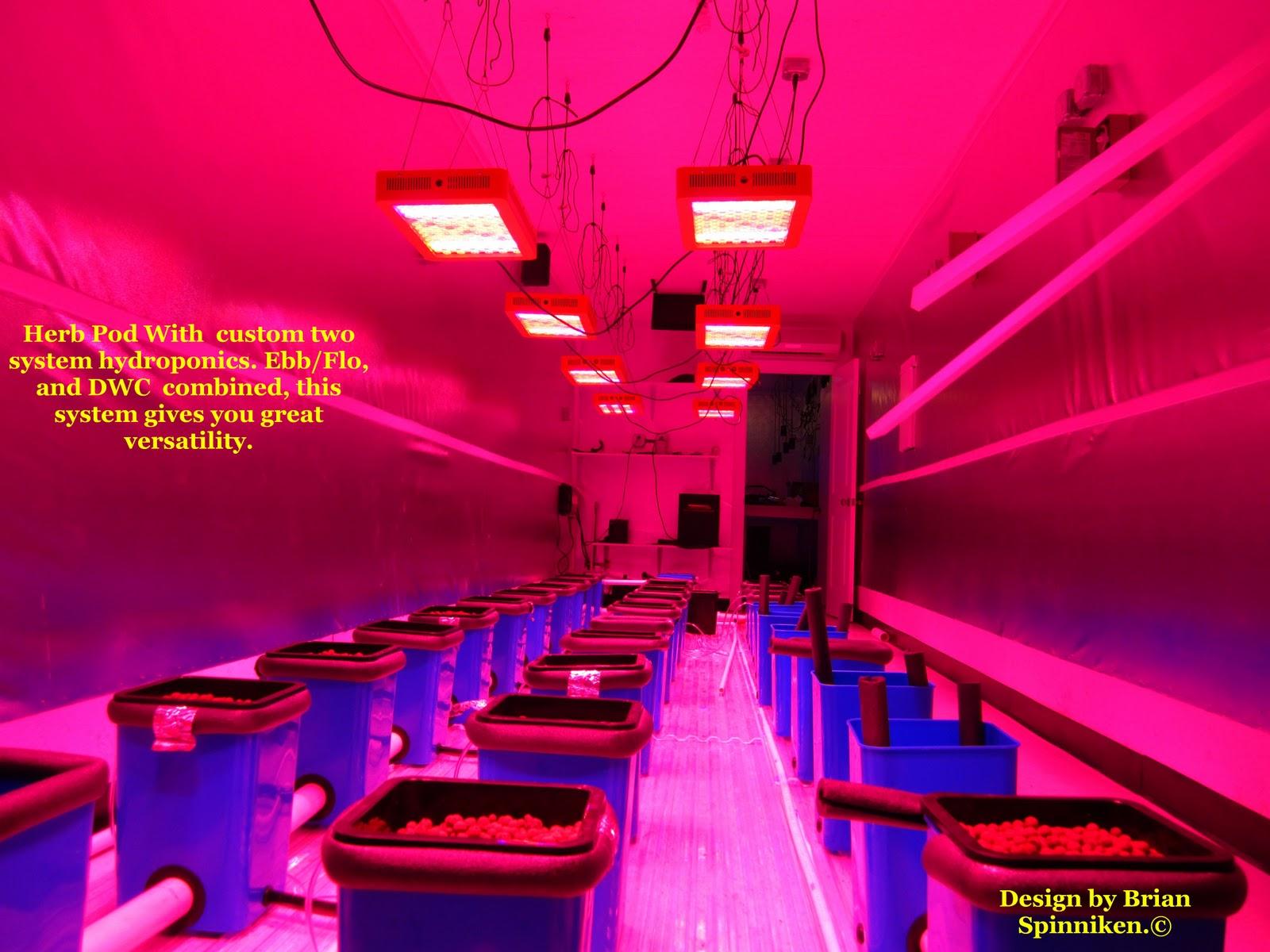 http://4.bp.blogspot.com/-U2Q2geeIWIk/TtCnohAa30I/AAAAAAAAALg/Qp8vdZ1NfE0/s1600/busy+bee+with+herb+pod.jpg
