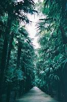 24- Görmedin mi Allah nasıl bir misal getirdi: Güzel bir sözü, kökü (yerde) sabit, dalları gökte olan güzel bir ağaca (benzetti).