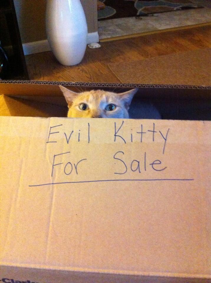 Сумасшедшие коты, фото 22