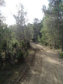 Carrera y Marcha-Onil