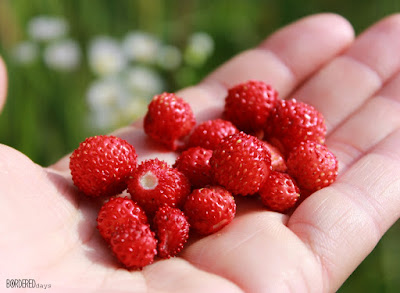 Wild strawberries on a palm