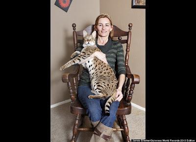 World's Tallest Cat