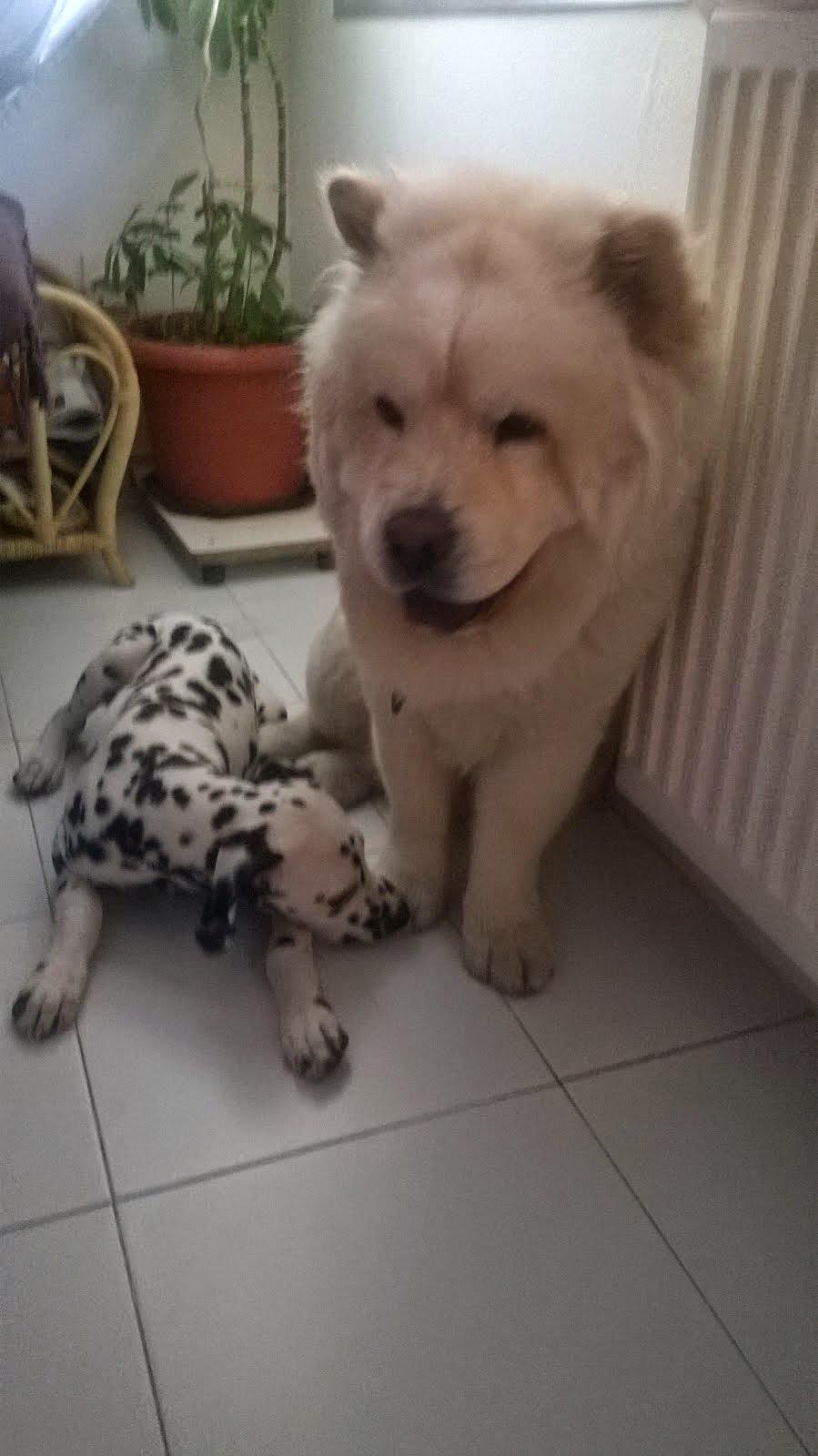 Bingo y Thor , Rafa cuidador demascotas
