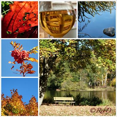 collage med bilder av höstlöv, rönnbär, parkbänk, damm och ölglas. foto: Reb Dutius