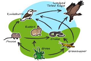 Pengertian Ekosistem Faktor Yang Mempengaruhi Ekosistem