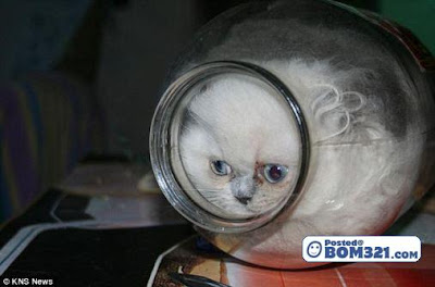 Dimanakah Kucing Comel Ini Tinggal ?