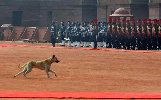 Dog entered Rashtrapati Bhavan during guard of honour given to Barack Obama