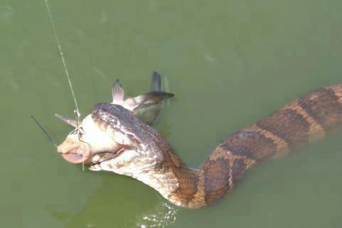 fish on line